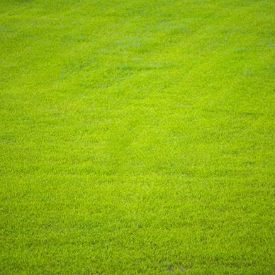 济南草坪种植基地