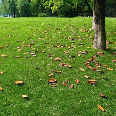 河北绿化草坪修剪