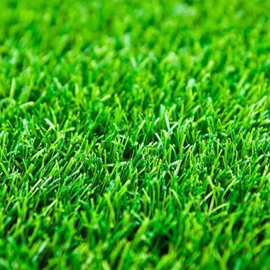 栾城绿化草坪