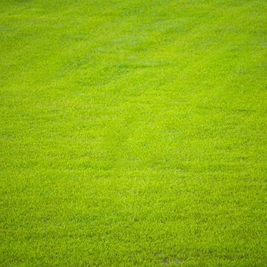 栾城草坪种植基地