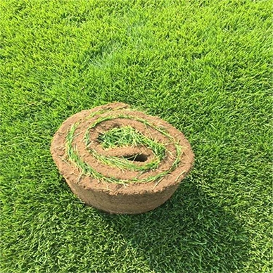 石家庄草坪基地维护