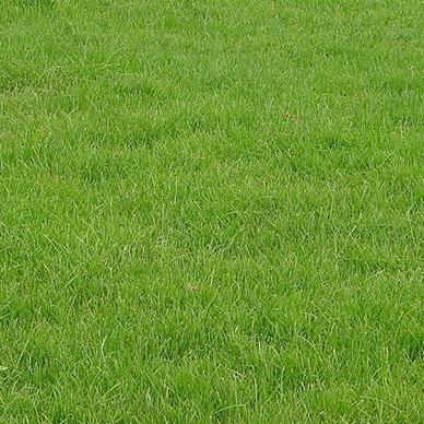 石家庄四季青草坪