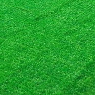 石家庄草皮