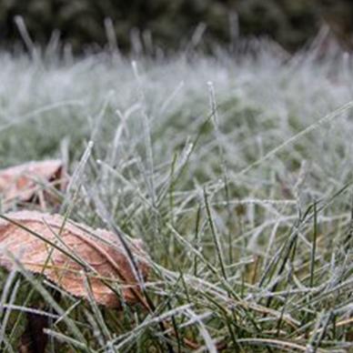 栾城冷季型草坪
