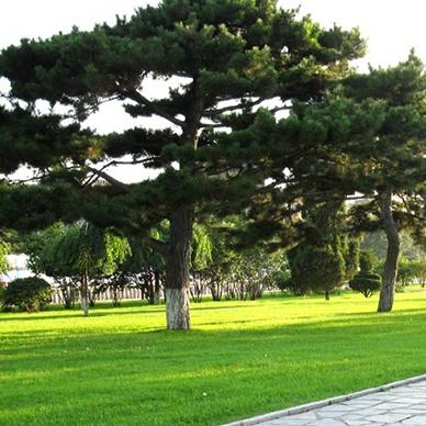 石家庄冷季型草坪