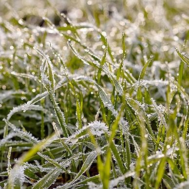 冷季型草坪的播种方法