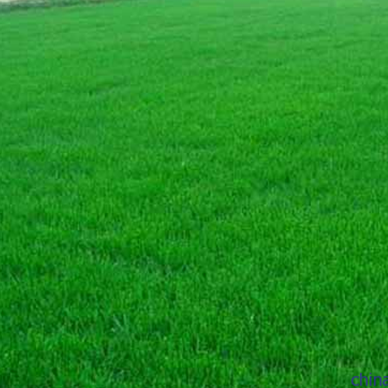 目前受人们欢迎的河北草种主要包括哪几种