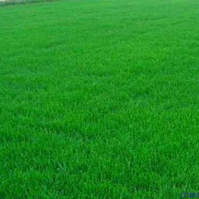 怎样更好的保持健康、无杂草的栾城草坪?