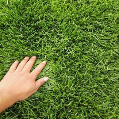 正确播种河北草籽的5个步骤