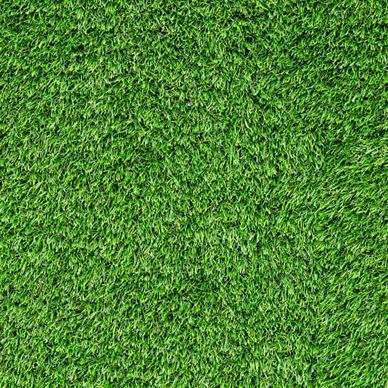 怎样修复石家庄草坪上的裸露斑点?